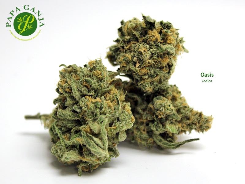 Rajas Weed image